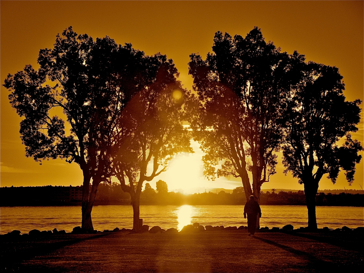 Tree-Lined Sunset