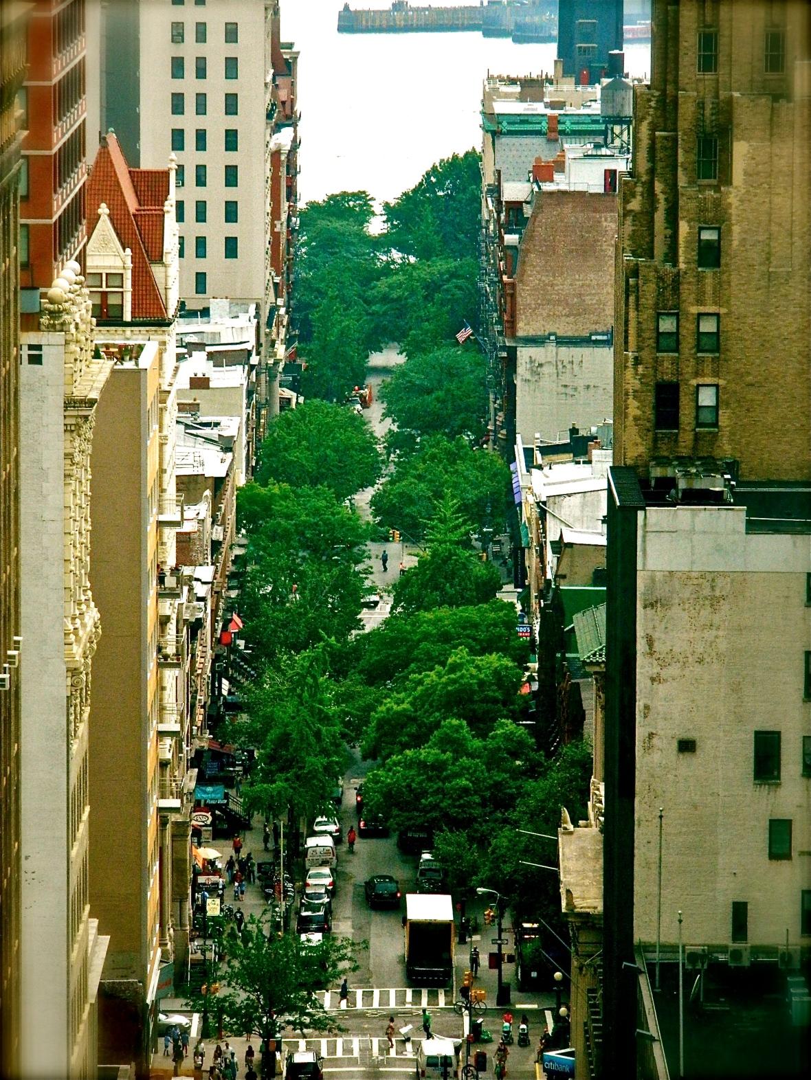 Trees Grow in Brooklyn