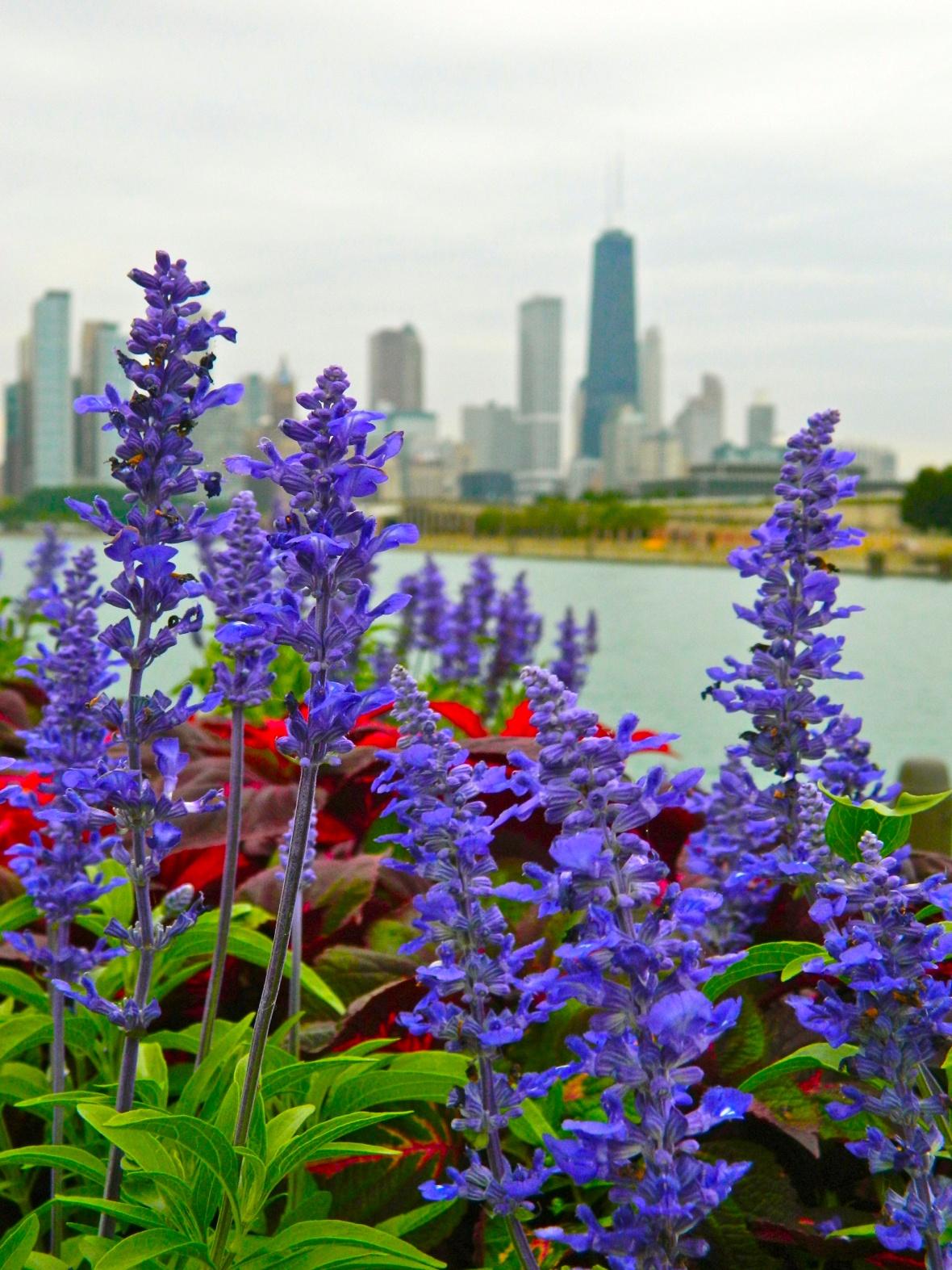 Skyline Flowers 7