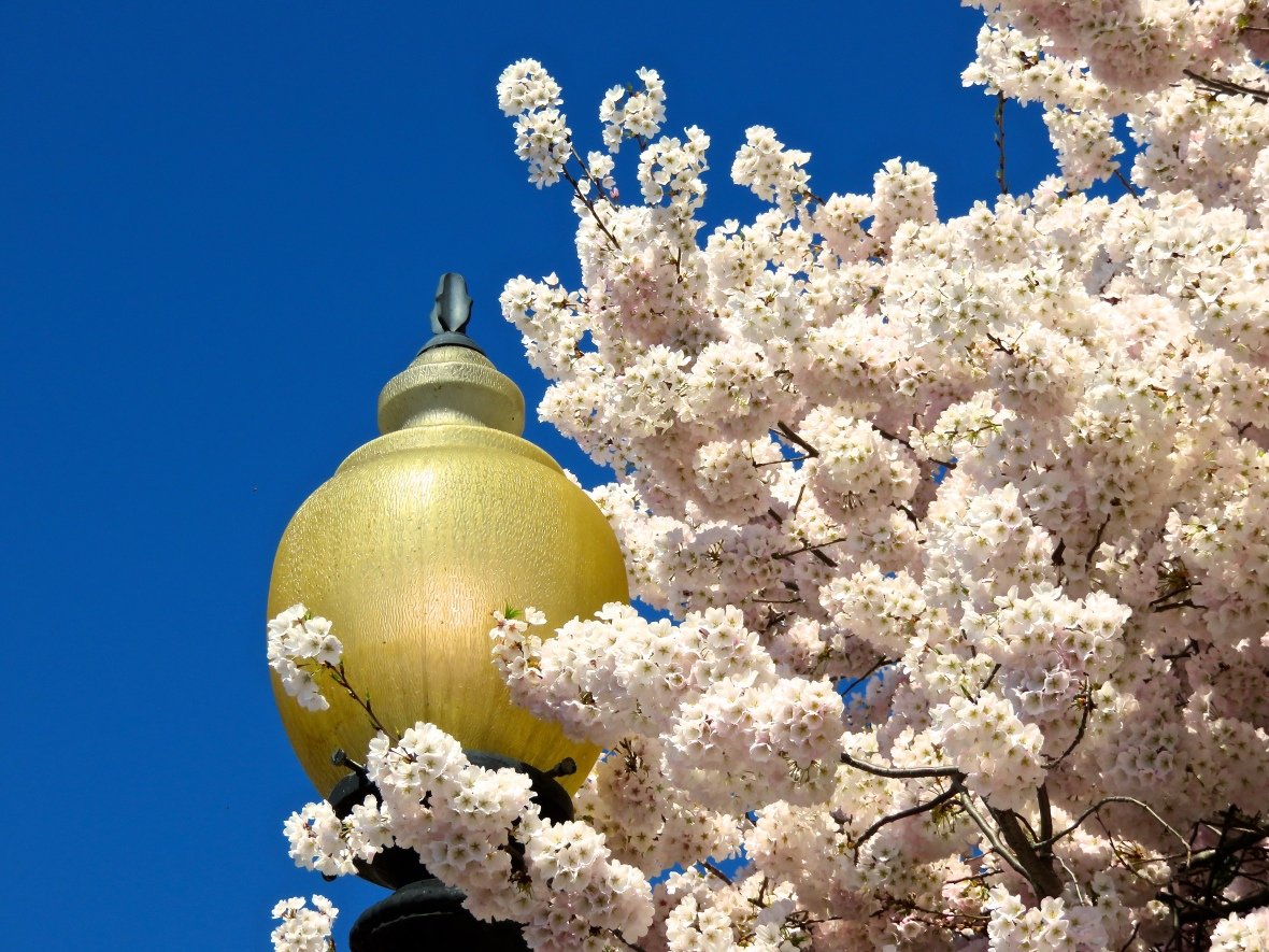 Lamp Blossoms Bunched
