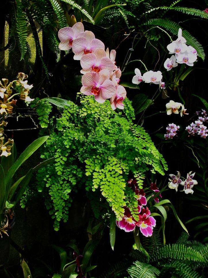 Longwood Orchid 3