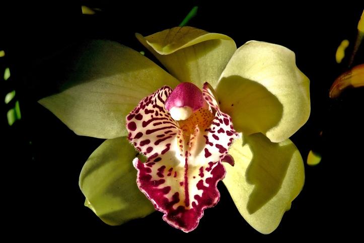Balboa Botanic Petals