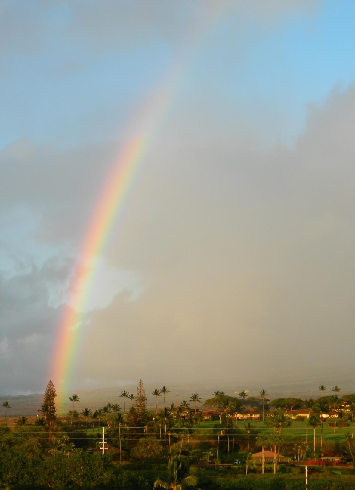 Rainbow Sky Pine